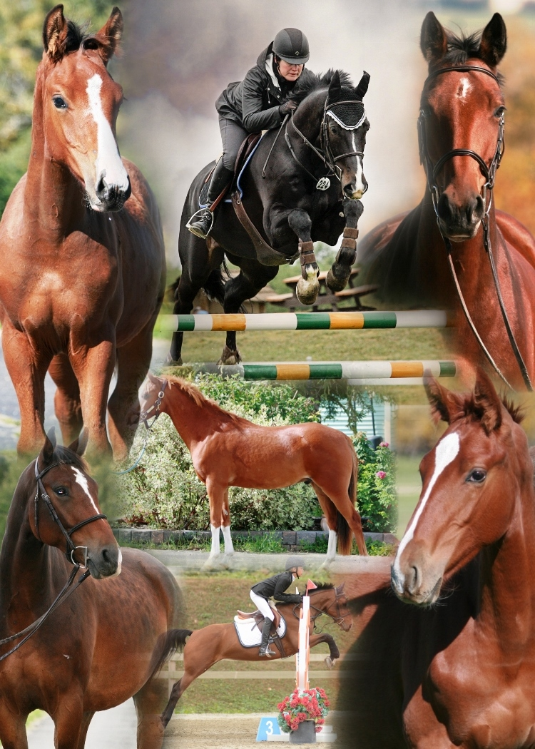 sales horses collage